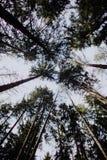 Het lopen alleen in het bos royalty-vrije stock foto
