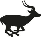 Het lopen Antilope Royalty-vrije Stock Afbeelding