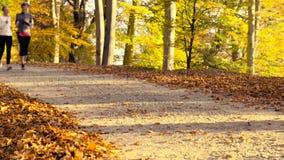 Het lopen bij park in de herfst stock videobeelden