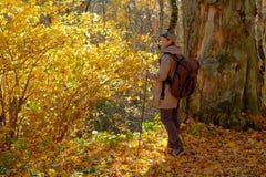 Het lopen in bos royalty-vrije stock foto
