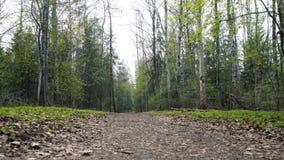 Het lopen in bospov stock footage