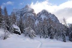 Het lopen in de bergen in het midden van de bergen tussen pijnbomen en sparren Stock Afbeelding