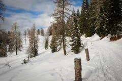 Het lopen in de bergen in het midden van de bergen tussen pijnbomen en sparren Royalty-vrije Stock Afbeeldingen