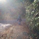 Het lopen in de de herfstbladeren Royalty-vrije Stock Fotografie