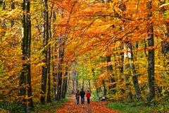 Het lopen in de herfstpark Stock Afbeeldingen