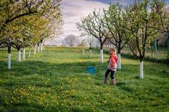 Het lopen in de lentetuin Stock Foto's