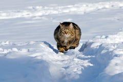 Het lopen in de sneeuw geeft genoegen Stock Foto