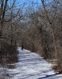 Het lopen in de winterhout Stock Fotografie