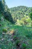 Het lopen diep in het bos in de bergen van de Pyreneeën Stock Foto