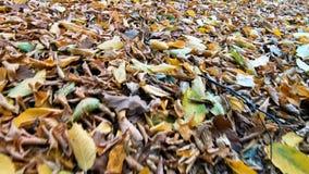 Het lopen door bladeren in de herfst stock footage