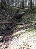 Het lopen door het bos Royalty-vrije Stock Foto