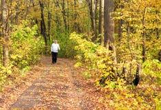 Het lopen door de herfstbos Royalty-vrije Stock Afbeeldingen