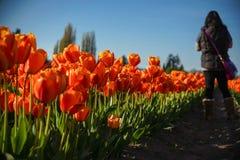 Het lopen door de tulpenrij Royalty-vrije Stock Afbeeldingen