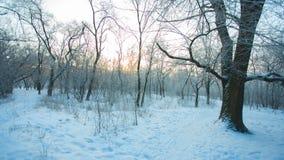 Het lopen door de winterpark stock videobeelden