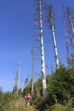Het lopen door droog hout Stock Afbeeldingen
