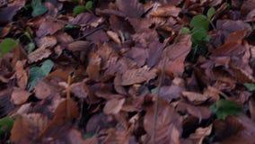 Het lopen in een bos in de herfst stock video