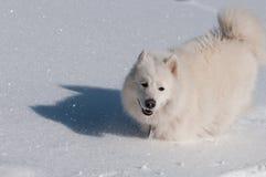 Het lopen in een sneeuw Stock Foto