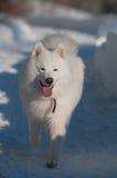 Het lopen in een sneeuw Royalty-vrije Stock Afbeelding
