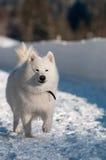 Het lopen in een sneeuw Stock Foto's