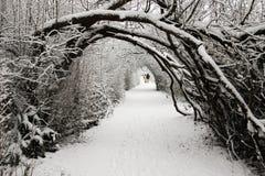 Het lopen in een Sprookjesland van de Winter royalty-vrije stock afbeelding