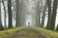Het lopen in een steeg stock fotografie