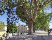 Het lopen en fietspad in park op middeleeuwse stadsmuur in Luca royalty-vrije stock fotografie