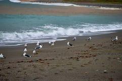 Het lopen en het letten op zeemeeuw op de hoefijzerstrand regenachtige dag royalty-vrije stock foto