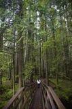 Het lopen in het bos Royalty-vrije Stock Afbeeldingen