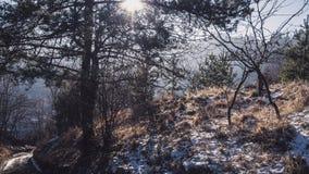 Het lopen in het bos Stock Fotografie