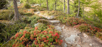 Het lopen in het bos in een bewolkte dag bij daling Geen mensen rond Royalty-vrije Stock Afbeeldingen