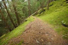 Het lopen in het bos in een bewolkte dag bij daling Geen mensen rond Royalty-vrije Stock Foto