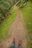 Het lopen in het bos in een bewolkte dag bij daling Geen mensen rond Royalty-vrije Stock Fotografie