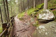 Het lopen in het bos in een bewolkte dag bij daling Geen mensen rond Stock Foto