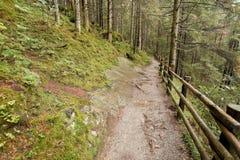 Het lopen in het bos in een bewolkte dag bij daling Geen mensen rond Stock Afbeelding