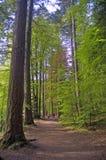 Het lopen in het hout Stock Fotografie