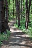Het lopen in het hout Stock Foto's