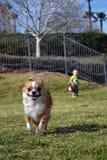 Het lopen in het park Stock Afbeelding