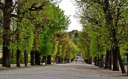 Het lopen in het park Royalty-vrije Stock Fotografie