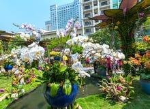 Het lopen het MaandieNieuwjaar van de straatochtend bij de stad in met bloemen langs straat worden verfraaid Royalty-vrije Stock Afbeelding