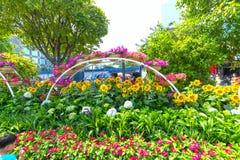Het lopen het MaandieNieuwjaar van de straatochtend bij de stad in met bloemen langs straat worden verfraaid Stock Foto