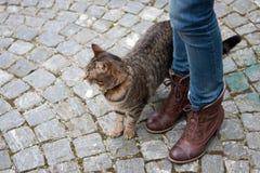 Het lopen met de kat in Italië Stock Afbeeldingen
