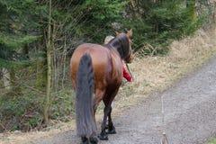 Het lopen met mijn paard Stock Afbeeldingen
