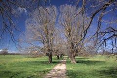 Het lopen onder bomen Stock Afbeelding