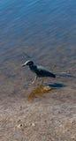 Het lopen in ondiep water Royalty-vrije Stock Foto