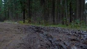 Het lopen op de bos vuile weg stock footage