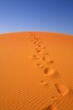 Het lopen op de Sahara Royalty-vrije Stock Afbeeldingen
