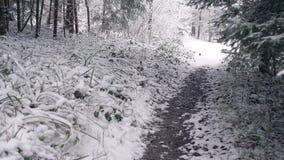 Het lopen op een smalle weg in een bos stock video