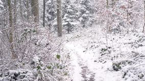 Het lopen op een smalle weg in een bos stock footage