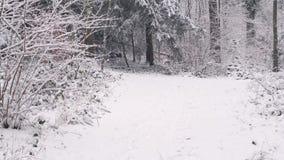 Het lopen op een smalle weg in een bos stock videobeelden