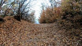 Het lopen op een voetpad in de herfst stock footage